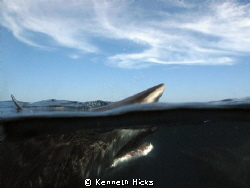 Over under of a Black tip. Shot taken with a standard Ike... by Kenneth Hicks 
